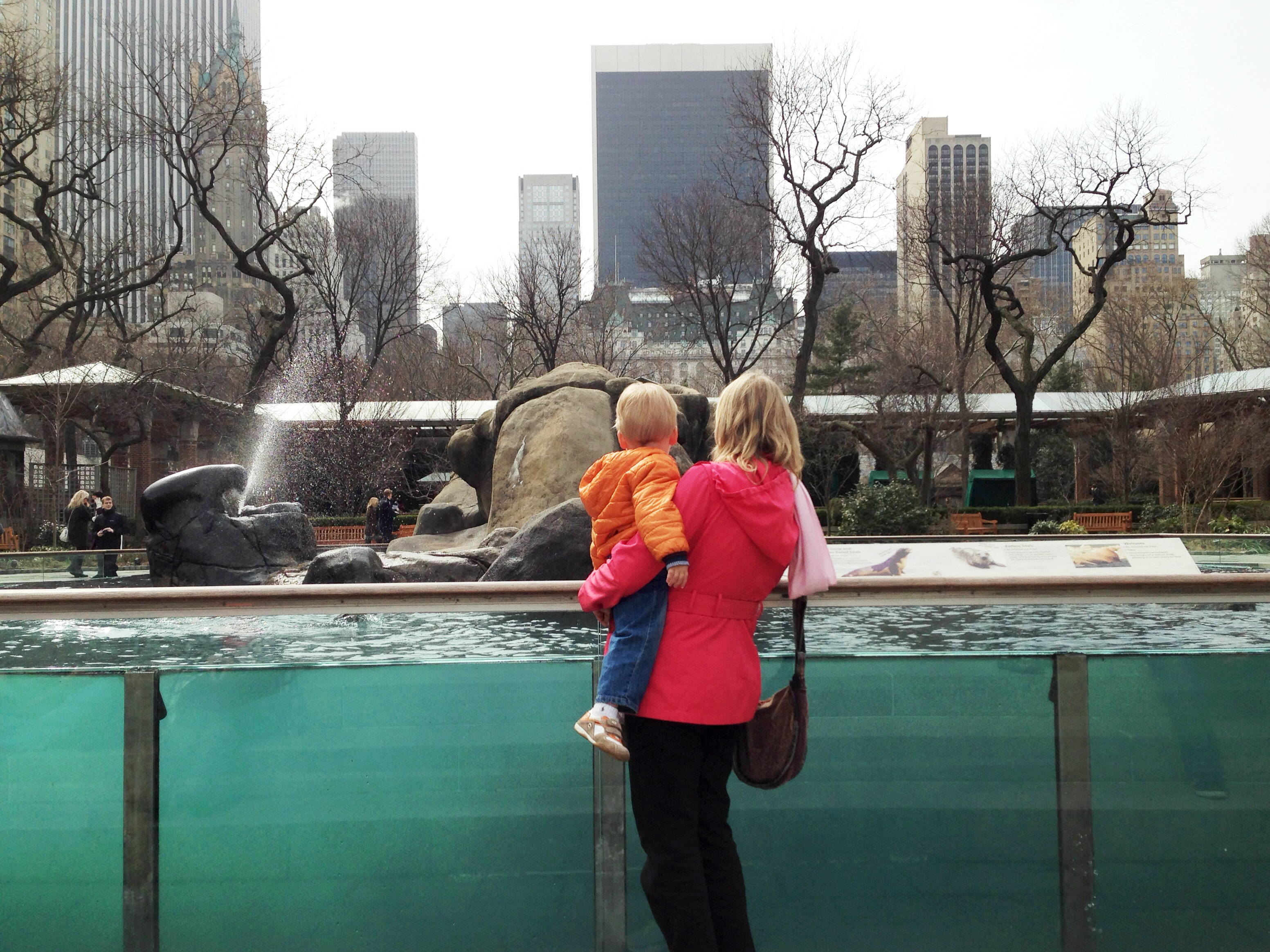 sea lions at the central park zoo my strange family. Black Bedroom Furniture Sets. Home Design Ideas