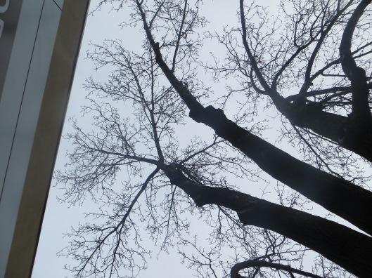Strange Trees 1